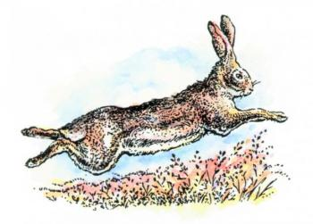 DS805Jackrabbit.jpg