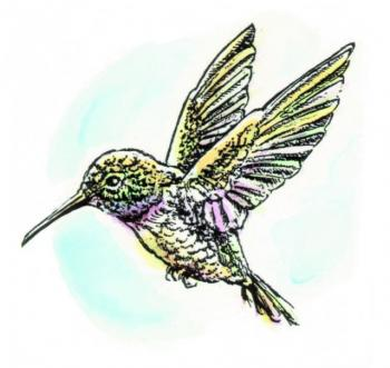 DS807Hummingbird.jpg