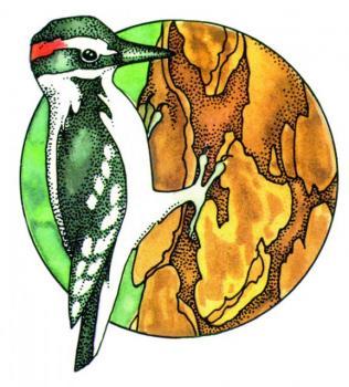 S615Woodpecker.jpg