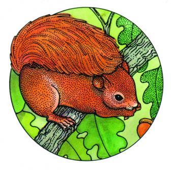 S641Squirrel.jpg